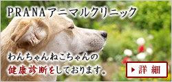 犬や猫の病気の相談・診察なら大阪の動物病院